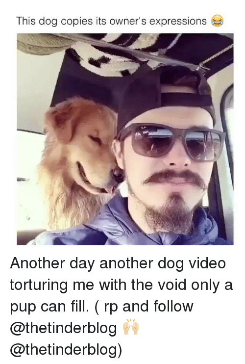 Memes, Video, and Pup: This dog copies its owner's expressions Another day another dog video torturing me with the void only a pup can fill. ( rp and follow @thetinderblog 🙌🏼 @thetinderblog)