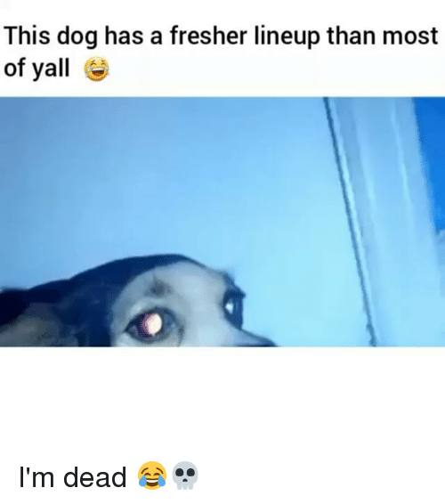 Yalling: This dog has a fresher lineup than most  of yall I'm dead 😂💀