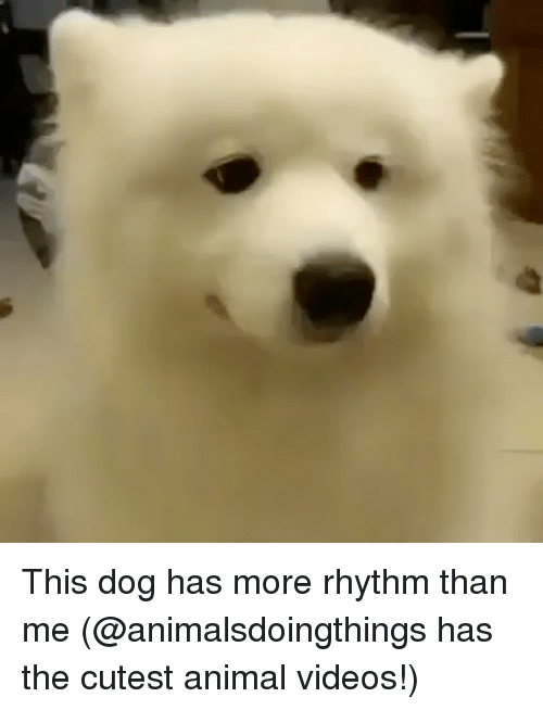 Animal Videos: This dog has more rhythm than me (@animalsdoingthings has the cutest animal videos!)