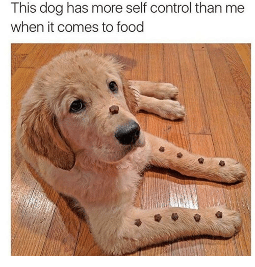 Food, Memes, and Control: This dog has more self control than me  when it comes to food