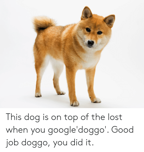 Lost, Good, and Doggo: This dog is on top of the lost when you google'doggo'. Good job doggo, you did it.