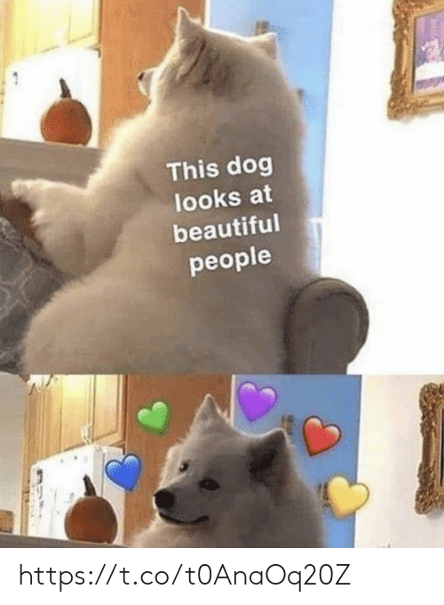 Looks At: This dog  looks at  beautiful  people https://t.co/t0AnaOq20Z