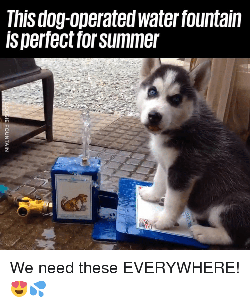 Dank, Summer, and 🤖: This dog-operated waterfountain  Is perfect for summer We need these EVERYWHERE! 😍💦