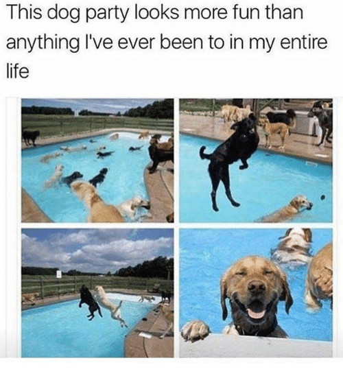 Life, Party, and Humans of Tumblr: This dog party looks more fun than  anything I've ever been to in my entire  life