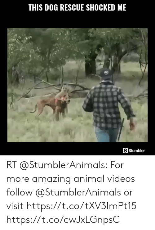Animal Videos: THIS DOG RESCUE SHOCKED ME  S Stumbler RT @StumblerAnimals: For more amazing animal videos follow @StumblerAnimals or visit https://t.co/tXV3ImPt15 https://t.co/cwJxLGnpsC