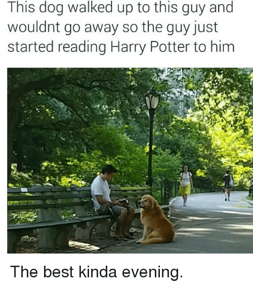 Harry Potter, Best, and Potter: This dog walked up to this guy and  wouldnt go away so the guy just  started reading Harry Potter to him The best kinda evening.