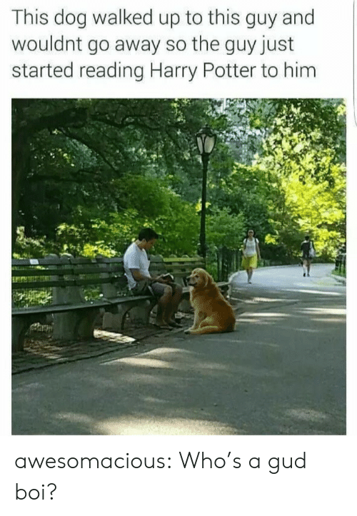 Harry Potter, Tumblr, and Blog: This dog walked up to this guy and  wouldnt go away so the guy just  started reading Harry Potter to him awesomacious:  Who's a gud boi?