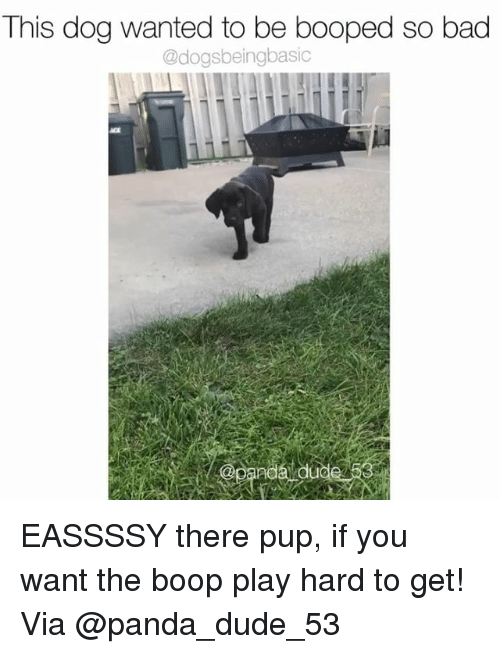 Bad, Dude, and Memes: This dog wanted to be booped so bad  @dogsbeingbasic  @panda duo EASSSSY there pup, if you want the boop play hard to get! Via @panda_dude_53