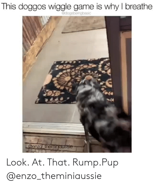Instagram, Target, and Game: This doggos wiggle game is why I breathe  Odogsbeingbasic  fale  44  @enza themintaussie Look. At. That. Rump.Pup @enzo_theminiaussie