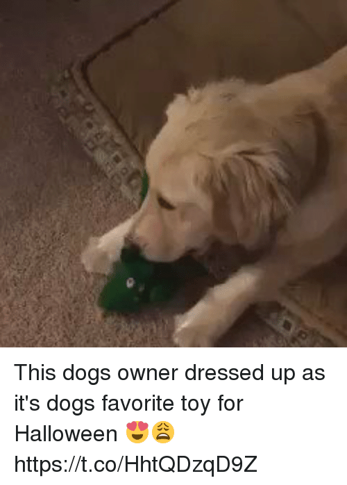 Dogs, Halloween, and Girl Memes: This dogs owner dressed up as it's dogs favorite toy for Halloween 😍😩https://t.co/HhtQDzqD9Z