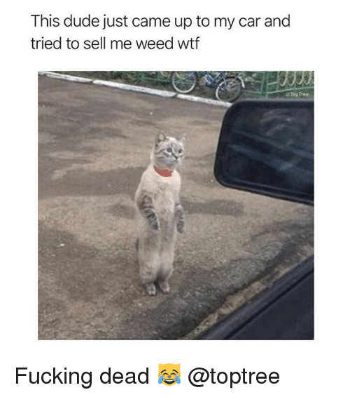 Dude, Fucking, and Weed: This dude just came up to my car and  tried to sell me weed wtf  TopTree Fucking dead 😹 @toptree