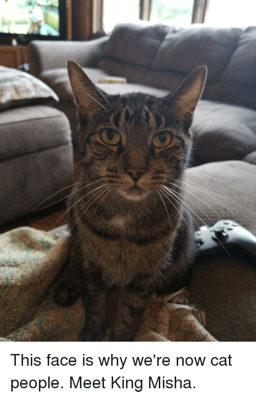 misha: This face is why we're now cat people. Meet King Misha.