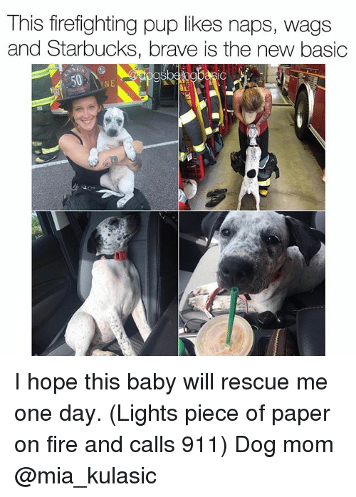 Fire, Memes, and Starbucks: This firefighting pup likes naps, wags  and Starbucks, brave is the new basic I hope this baby will rescue me one day. (Lights piece of paper on fire and calls 911) Dog mom @mia_kulasic