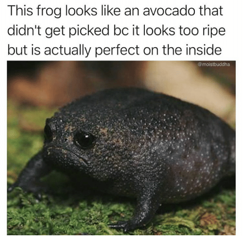 Avocado, Frog, and Inside: This frog looks like an avocado that  didn't get picked bc it looks too ripe  but is actually perfect on the inside  @moistbuddha