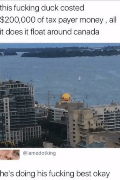 Fucking, Money, and Best: this fucking duck costed  $200,000 of tax payer money, all  it does it float around canada  @lamedotking  he's doing his fucking best okay