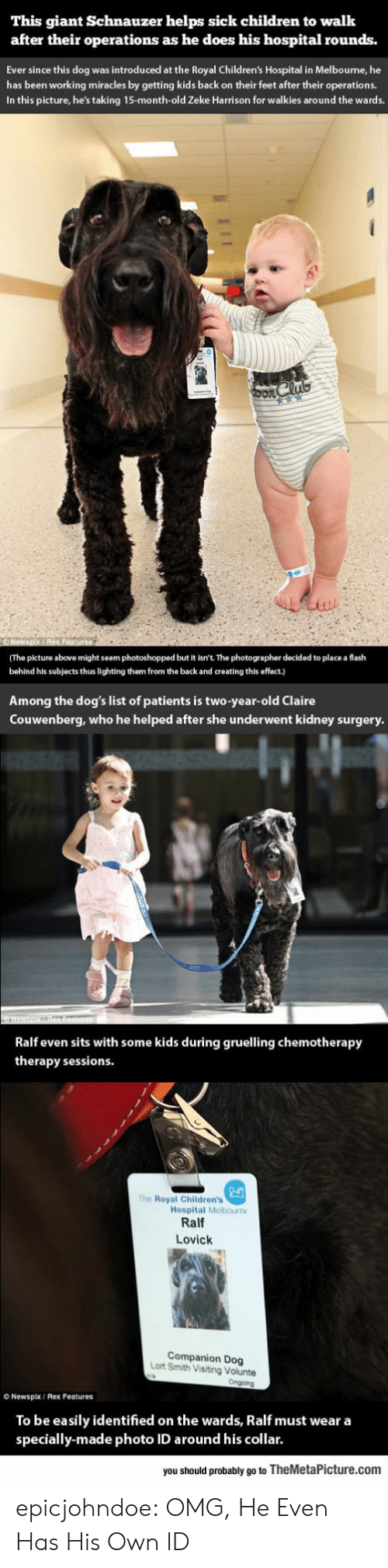 Children, Dogs, and Omg: This giant Schnauzer helps sick children to walk  after their operations as he does his hospital rounds.  Ever since this dog was introduced at the Royal Children's Hospital in Melbourne, he  has been working miracles by getting kids back on their feet after their operations.  In this picture, he's taking 15-month-old Zeke Harrison for walkies around the wards.  (The picture above might seem photoshopped but it isn't. The photographer decided to place a flash  behind his subjects thus lighting them from the back and creating this effect.)  Among the dog's list of patients is two-year-old Claire  Couwenberg, who he helped after she underwent kidney surgery  Ralf even sits with some kids during gruelling chemotherapy  therapy sessions  The Royal Children's  Hospital Melbourn  Ralf  Lovick  Companion Dog  Lort Smith Visiting Volunte  O Newspix/ Rex Features  To be easily identified on the wards, Ralf must wear a  specially-made photo ID around his collar.  you should probably go to TheMetaPicture.com epicjohndoe:  OMG, He Even Has His Own ID