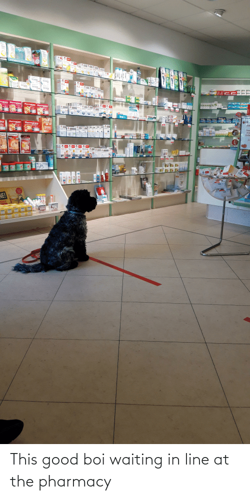 The Pharmacy: This good boi waiting in line at the pharmacy