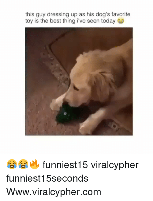 Dogs, Funny, and Best: this guy dressing up as his dog's favorite  toy is the best thing i've seen today 😂😂🔥 funniest15 viralcypher funniest15seconds Www.viralcypher.com