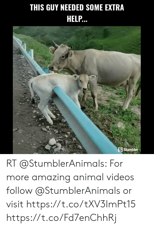 Animal Videos: THIS GUY NEEDED SOME EXTRA  HELP..  S Stumbler RT @StumblerAnimals: For more amazing animal videos follow @StumblerAnimals or visit https://t.co/tXV3ImPt15 https://t.co/Fd7enChhRj