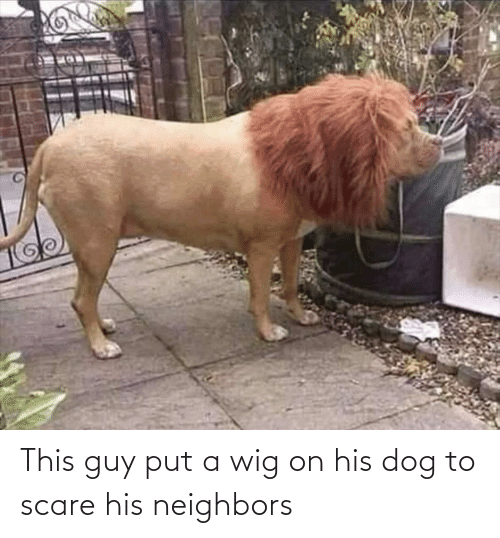 Neighbors: This guy put a wig on his dog to scare his neighbors