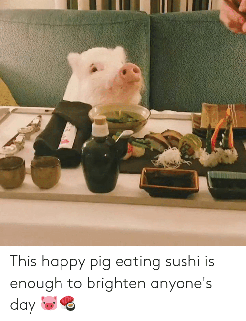 Sushi: This happy pig eating sushi is enough to brighten anyone's day 🐷🍣
