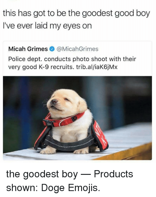 doges: this has got to be the goodest good boy  I've ever laid my eyes on  Micah Grimes@MicahGrimes  Police dept. conducts photo shoot with their  very good K-9 recruits. trib.al/iaK6jMx the goodest boy   — Products shown: Doge Emojis.