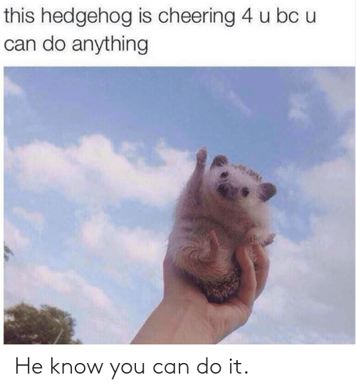 Dank, Hedgehog, and 🤖: this hedgehog is cheering 4 u bc u  can do anything He know you can do it.
