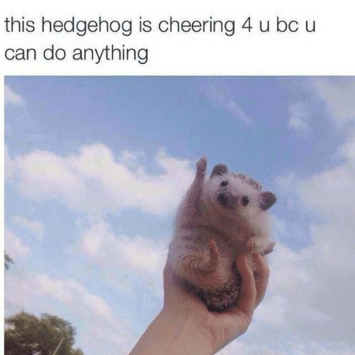 Hedgehog: this hedgehog is cheering 4 u bc u  can do anything