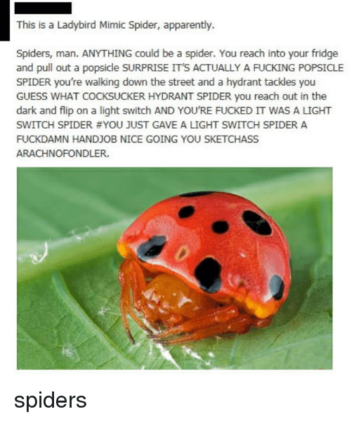 Nice Going: This is a Ladybird Mimic Spider, apparently.  Spiders, man. ANYTHING could be a spider. You reach into your fridge  and pull out a popsicle SURPRISE IT'S ACTUALLY A FUCKING POPSICLE  SPIDER you're walking down the street and a hydrant tackles you  GUESS WHAT COCKSUCKER HYDRANT SPIDER you reach out in the  dark and flip on a light switch AND YOU'RE FUCKED IT WAS A LIGHT  SWITCH SPIDER #YOU JUST GAVE A LIGHT SWITCH SPIDER A  FUCKDAMN HANDJOB NICE GOING YOU SKETCHASS  ARACHNOFONDLER. <p>spiders</p>