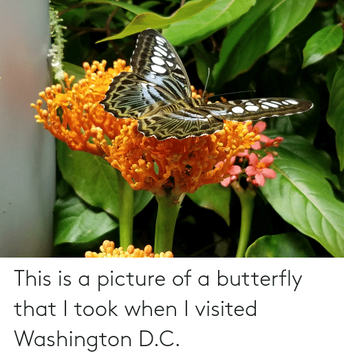 Visited: This is a picture of a butterfly that I took when I visited Washington D.C.