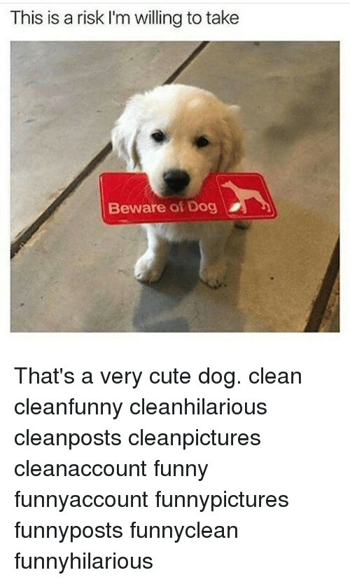 cute dogs: This is a risk I'm willing totake  Beware of Dog That's a very cute dog. clean cleanfunny cleanhilarious cleanposts cleanpictures cleanaccount funny funnyaccount funnypictures funnyposts funnyclean funnyhilarious