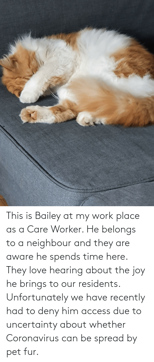fur: This is Bailey at my work place as a Care Worker. He belongs to a neighbour and they are aware he spends time here. They love hearing about the joy he brings to our residents. Unfortunately we have recently had to deny him access due to uncertainty about whether Coronavirus can be spread by pet fur.