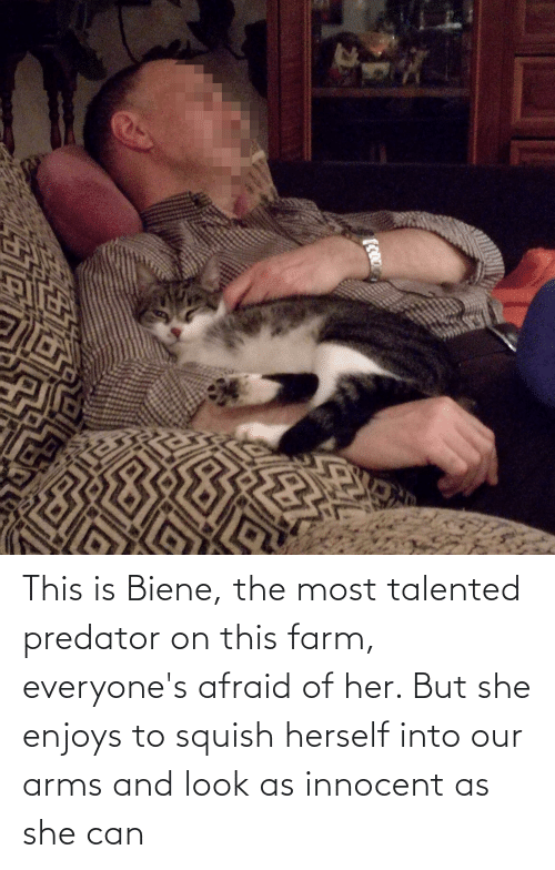 innocent: This is Biene, the most talented predator on this farm, everyone's afraid of her. But she enjoys to squish herself into our arms and look as innocent as she can