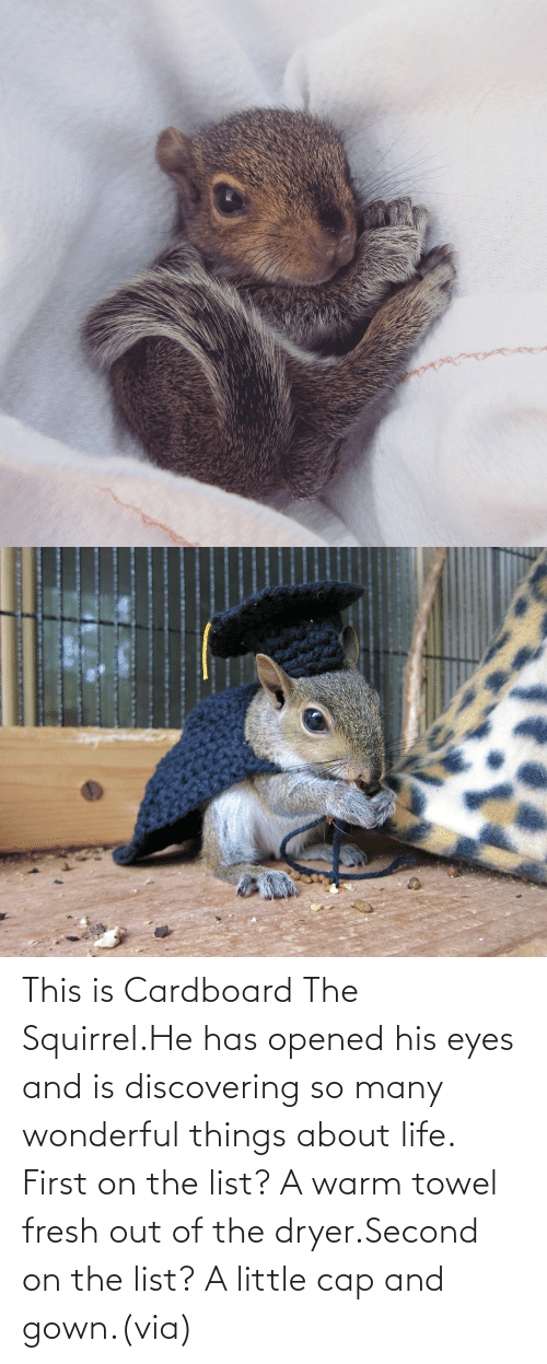 About Life: This is Cardboard The Squirrel.He has opened his eyes and is discovering so many wonderful things about life. First on the list? A warm towel fresh out of the dryer.Second on the list? A little cap and gown.(via)