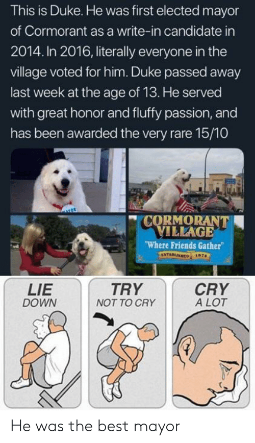 Friends, Best, and Duke: This is Duke. He was first elected mayor  of Cormorant as a write-in candidate in  2014. In 2016, literally everyone in the  village voted for him. Duke passed away  last week at the age of 13. He served  with great honor and fluffy passion, and  has been awarded the very rare 15/10  CORMORANT  VILLAGE  Where Friends Gather  ESTABLISHED 1674  LIE  DOWN  TRY  NOT TO CRY  CRY  A LOT He was the best mayor