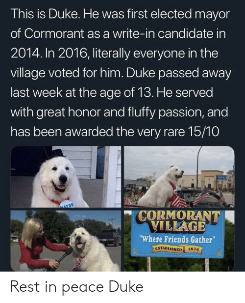 """Friends, Duke, and Peace: This is Duke. He was first elected mayor  of Cormorant as a write-in candidate in  2014. In 2016, literally everyone in the  village voted for him. Duke passed away  last week at the age of 13. He served  with great honor and fluffy passion, and  has been awarded the very rare 15/10  """" CORMORANT  ILLAGE  Where Friends Gather""""  ESTABLISHED 1874  el Rest in peace Duke"""