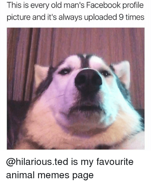 Facebook, Memes, and Ted: This is every old man's Facebook profile  picture and it's always uploaded 9 times @hilarious.ted is my favourite animal memes page