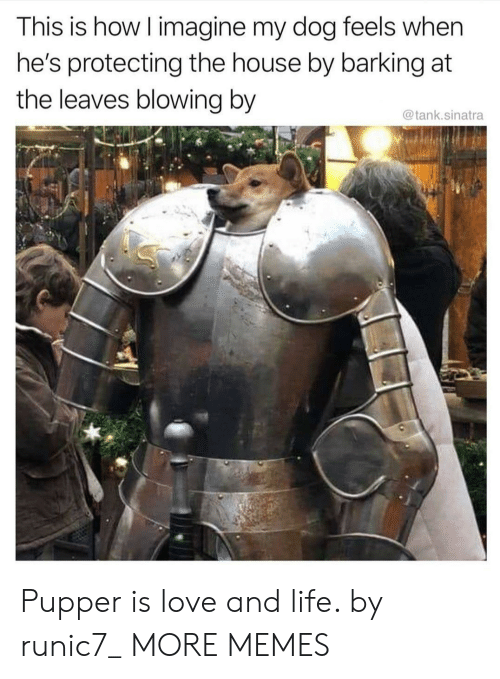 Dank, Life, and Love: This is how I imagine my dog feels when  he's protecting the house by barking at  the leaves blowing by  @tank.sinatra Pupper is love and life. by runic7_ MORE MEMES