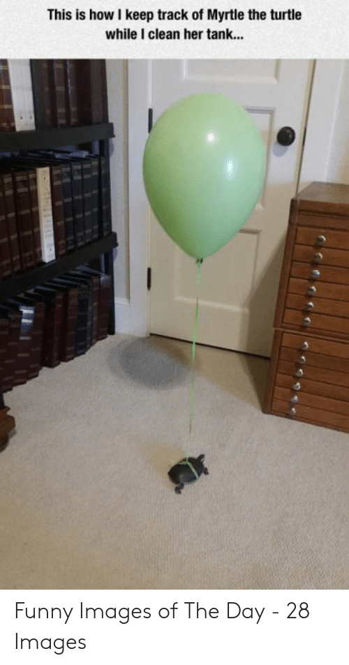 Funny, Images, and Turtle: This is how I keep track of Myrtle the turtle  while I clean her tank... Funny Images of The Day - 28 Images
