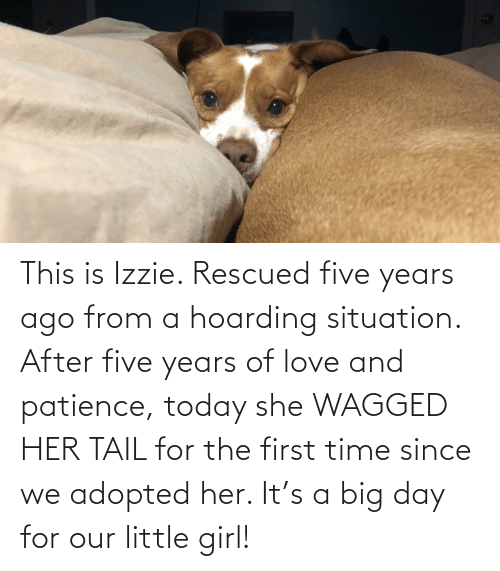 Patience: This is Izzie. Rescued five years ago from a hoarding situation. After five years of love and patience, today she WAGGED HER TAIL for the first time since we adopted her. It's a big day for our little girl!
