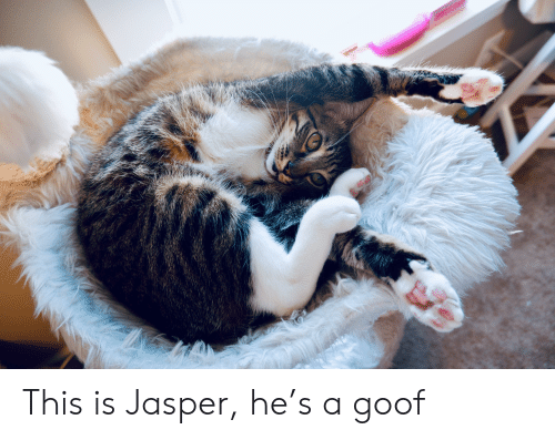 Jasper, This, and This Is: This is Jasper, he's a goof