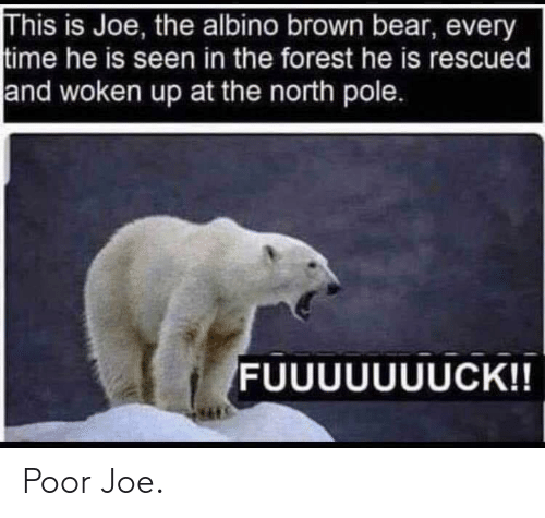 Bear, Time, and The Forest: This is Joe, the albino brown bear, every  time he is seen in the forest he is rescued  and woken up at the north pole. Poor Joe.