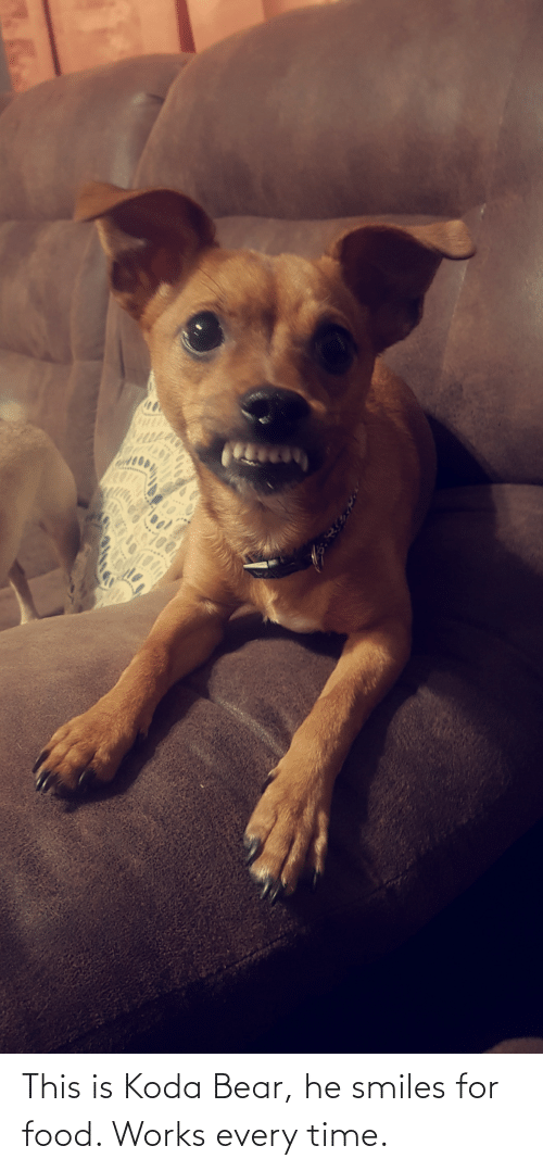 He Smiles: This is Koda Bear, he smiles for food. Works every time.