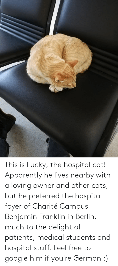 Medical Students: This is Lucky, the hospital cat! Apparently he lives nearby with a loving owner and other cats, but he preferred the hospital foyer of Charité Campus Benjamin Franklin in Berlin, much to the delight of patients, medical students and hospital staff. Feel free to google him if you're German :)