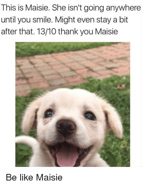 Maisie: This is Maisie. She isn't going anywhere  until you smile. Might even stay a bit  after that. 13/10 thank you Maisie <p>Be like Maisie</p>