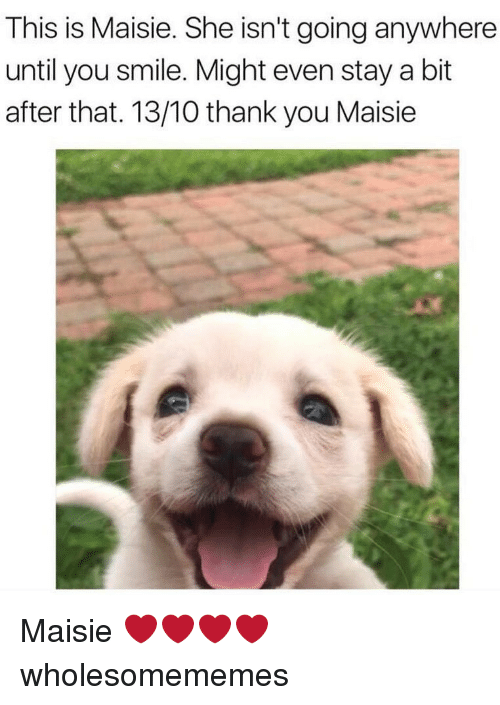 Maisie: This is Maisie. She isn't going anywhere  until you smile. Might even stay a bit  after that. 13/10 thank you Maisie Maisie ❤️❤️❤️❤️ wholesomememes