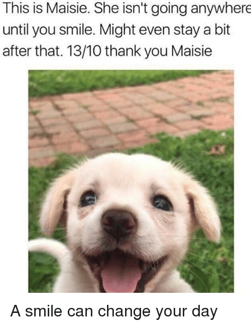 Maisie: This is Maisie. She isn't going anywhere  until you smile. Might even stay a bit  after that. 13/10 thank you Maisie A smile can change your day