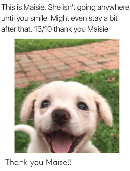 Maisie: This is Maisie. She isn't going anywhere  until you smile. Might even stay a bit  after that. 13/10 thank you Maisie Thank you Maise!!