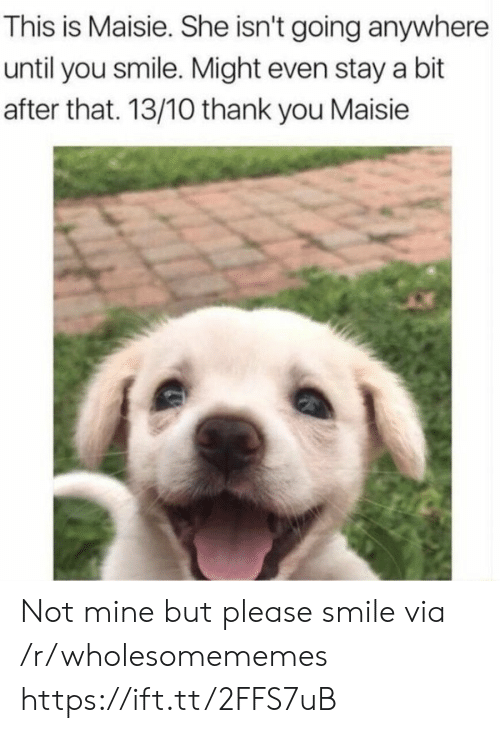 Maisie: This is Maisie. She isn't going anywhere  until you smile. Might even stay a bit  after that. 13/10 thank you Maisie Not mine but please smile via /r/wholesomememes https://ift.tt/2FFS7uB