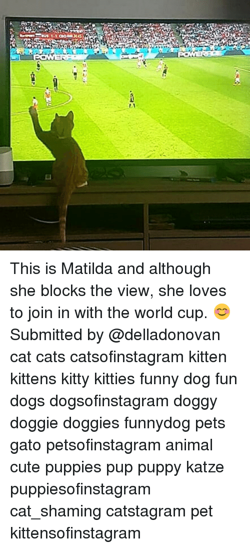 Katze: This is Matilda and although she blocks the view, she loves to join in with the world cup. 😊 Submitted by @delladonovan cat cats catsofinstagram kitten kittens kitty kitties funny dog fun dogs dogsofinstagram doggy doggie doggies funnydog pets gato petsofinstagram animal cute puppies pup puppy katze puppiesofinstagram cat_shaming catstagram pet kittensofinstagram